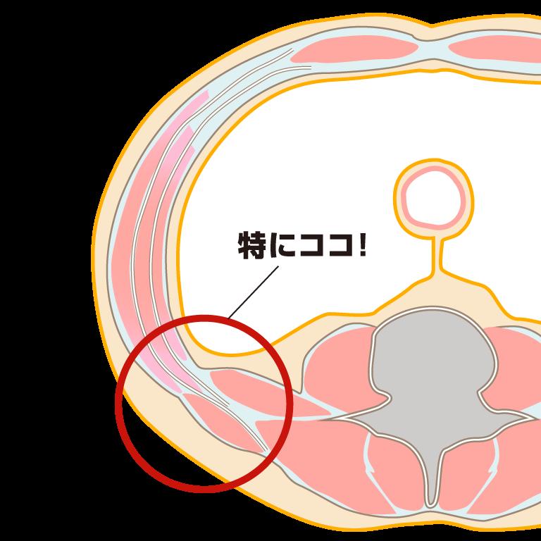 胸腰筋膜の図解