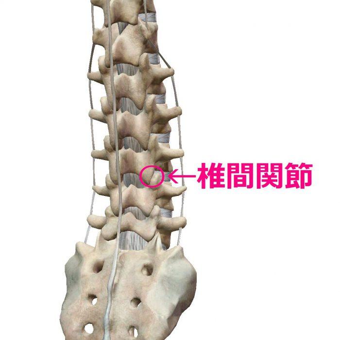 腰の真ん中が痛い原因の椎間関節